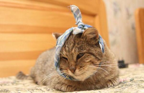 у кошки на шее кровяные болячки