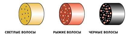 Различное сочетание темных и светлых пигментов дают в результате широкую гамму окраски шевелюры.