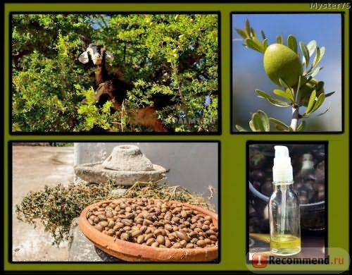 Дерево Аргания с козами, плоды, масло Melvita