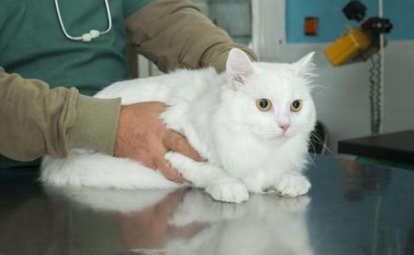 кошки болячки на шее чем лечить