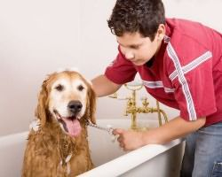перхоть у собаки лечение