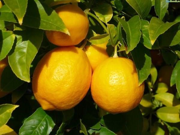 Лимон нужен и для укладки