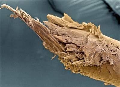Обломанный край стержня (фото под сильным увеличением)
