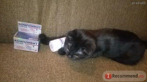 Котик для настроения ))
