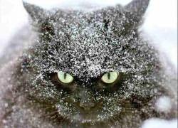 Перхоть у кошки причины