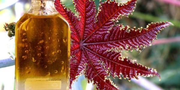 Касторовое масло в бутылочке