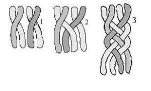 Коса из четырех прядей схема