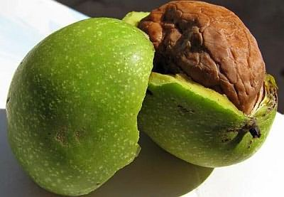В состав зеленой шкурки грецкого ореха входит красящее вещество югнон, которое обладает отличными бактерицидными свойствами.