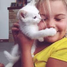 у кошки болячка на шее кровяная короста