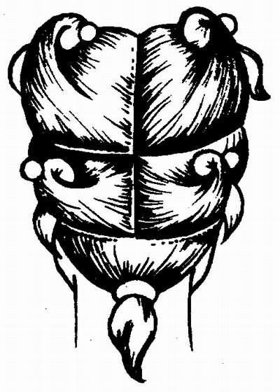 вариант деления волос на зоны при стрижке «боб»