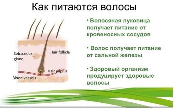 Принцип питания волос