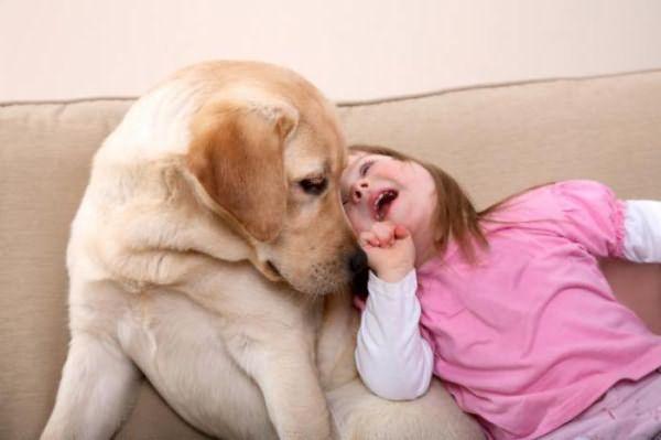 человеческие вши у собак