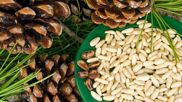 Кедровые орешки полезны для организма и эффективны в борьбе с нежелательным ростом волос