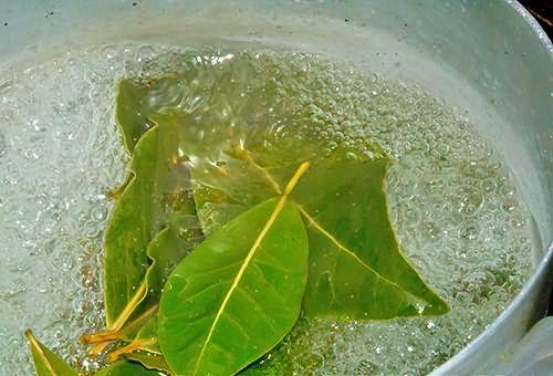 Проще всего приготовить отвар - нужно только залить листья кипятком и дать настояться.