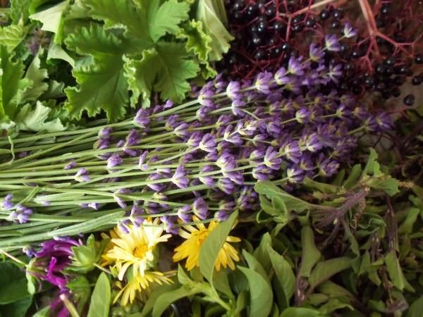 Выбирайте шампуни и бальзамы, приготовленные на отварах лекарственных трав: ромашки, хвоща, крапивы