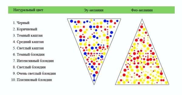 Молекулы меланина влияют на цвет локонов