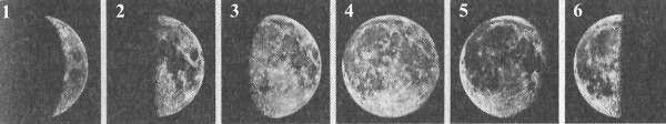 Фазы Луны: 1- Молодая, 2- первая четверть, 3- растущая, 4- полная, 5- убывающая, 6- последняя четверть.
